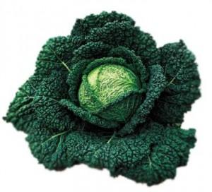 Савойская капуста: экзотично, полезно и вкусно!
