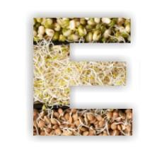 ВИТАМИН E: потребность и влияние на организм. В каких продуктах содержится.