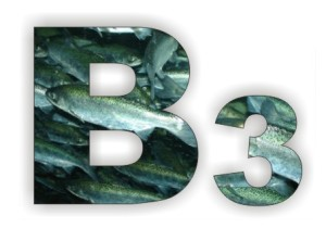 ВИТАМИН В3 (витамин PP): потребность и роль в организме. В каких продуктах содержится.