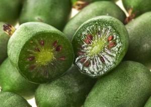 актинидия ягоды полезные свойства